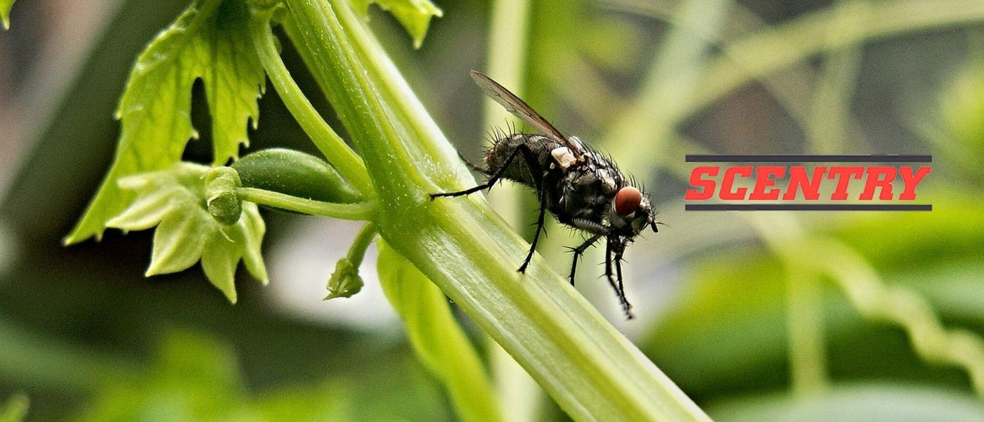 zimex-control-de-insectos-scentry-v2b