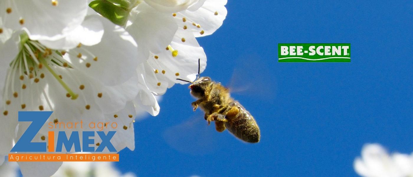 zimex-feromonas-atrayente-de-abejas-v2