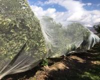 Malla Agrícola protección frutales DrapeNet